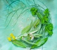 Arreglo de diversas hierbas frescas Fotos de archivo libres de regalías