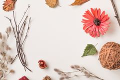 Arreglo de diversas plantas secas con el espacio vacío Foto de archivo libre de regalías