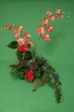 Arreglo de la orquídea Imagen de archivo