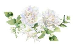 Arreglo de las rosas blancas y de la fresia stock de ilustración