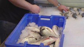 Arreglo de pescados en el hielo para la exhibición almacen de video