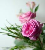 Arreglo de Rose Fotos de archivo