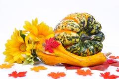 Arreglo del otoño de calabazas Fotografía de archivo