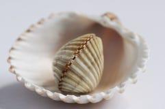 Arreglo del shell Imagen de archivo