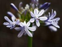 arreglo floral fotos de archivo libres de regalías