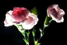 Arreglo floral Imágenes de archivo libres de regalías