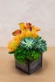 Arreglo floral con las calas, clavel, succulent, protea Imagen de archivo libre de regalías