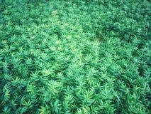 Arreglo fresco de la naturaleza de la hierba verde Pequeñas hojas en fondo del prado foto de archivo libre de regalías