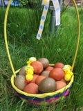 Arreglo pintado natural de los huevos de Pascua en una cesta Fotos de archivo