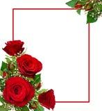 Arreglos de la esquina con las rosas rojas y flores y BU del gypsophila Imágenes de archivo libres de regalías