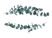 Arreglos decorativos de la onda de las hojas del eucalipto foto de archivo libre de regalías