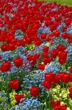 Arreglos del tulipán Imagenes de archivo
