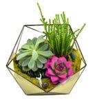 Arreglos florales Fotos de archivo libres de regalías