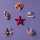 Arrengement marin créatif Image stock