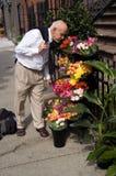 Arresto per sentire l'odore dei fiori fotografie stock