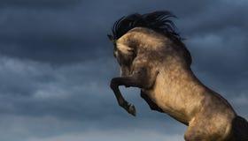 Arrière andalou de cheval avec les cieux obscurcis dramatiques Photographie stock