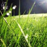 Arrière-cour d'herbe verte Photo libre de droits