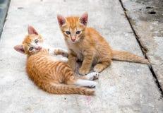 Arrière-cour mignonne de deux chatons à la maison Photos stock