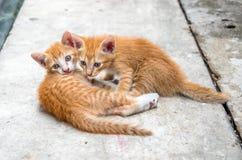Arrière-cour mignonne de deux chatons à la maison Photo stock