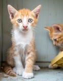 Arrière-cour mignonne de deux chatons à la maison Photo libre de droits