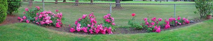 Arrière-cour Rose Panorama Photographie stock libre de droits