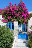 Arrière-cour tranquille colorée avec de belles fleurs et architecture traditionnelle classique d'île de Santorini Photos libres de droits
