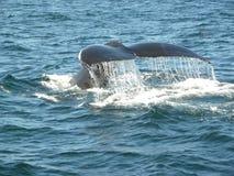 Arrière de baleine Image libre de droits