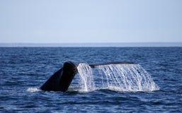 Arrière de baleine Image stock