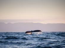 Arrière 3 de baleine Images libres de droits