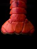 Arrière de langoustine Photographie stock