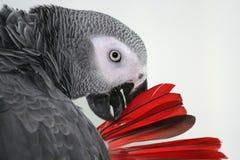 Arrière rouge Photo stock