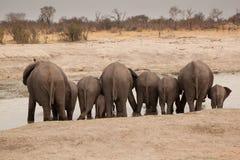 Arrières d'éléphants photographie stock