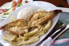 Arrières de langoustine des Caraïbes Images stock
