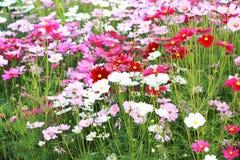 arriate Flores coloridas en jardín Foto de archivo libre de regalías