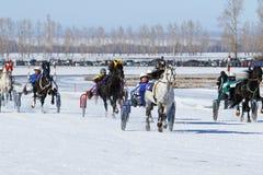 Arrivées d'hiver sur des chevaux Images libres de droits