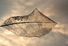 The arrival of autumn... Dead Leaf! the arrival of autumn... all that lives has a end, even the leaves Stock Photos