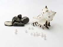 After arrival from a sea. A sea cockleshells, pebbles, pearls lie on a white background Stock Image