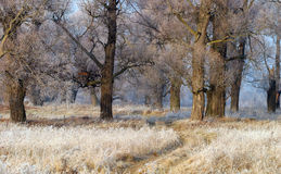 The arrival of winter Royalty Free Stock Photography