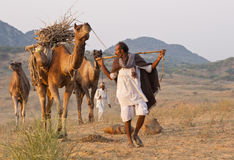 Arriving at the Pushkar Camel Fair Royalty Free Stock Images