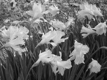Arrivo della primavera Fotografie Stock