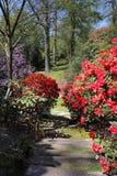 Arrivo della primavera in un giardino inglese del paesaggio fotografia stock libera da diritti