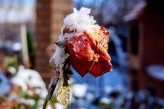 Arrivo inatteso dell'inverno fotografia stock