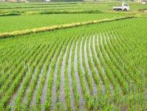 Arroces de arroz en Japón Imagenes de archivo