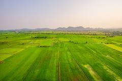 Arroces de arroz verdes Imagen de archivo libre de regalías