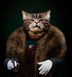 Arrogant sophisticated dressed cat boss looking with contempt. Portrait of Gangster boss Pet in fur coat with bow and white gloves with whisky glass. Nasty Royalty Free Stock Photo