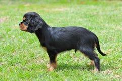 Arrogante hond Royalty-vrije Stock Foto