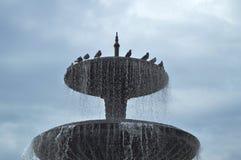 Arroje a chorros, salpique la fuente de agua Las palomas se sientan en una fuente de la ciudad Imagenes de archivo