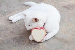 Arroje el gato blanco con la caja del corazón, gatos del amor Imagen de archivo libre de regalías
