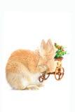 Arroje el pequeño conejo de conejito lindo aislado en un fondo blanco Fotografía de archivo