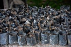 Arrosé avec l'assaisonnement gris de cendre volcanique n'a pas voulu et x28 ; Sumat Images stock